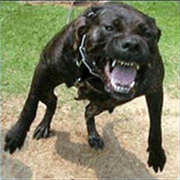 Dog Bite Defense Florida